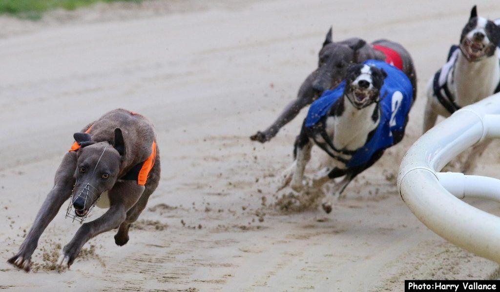 Irish greyhound derby 2021 betting advice buys lamborghini with bitcoins rate
