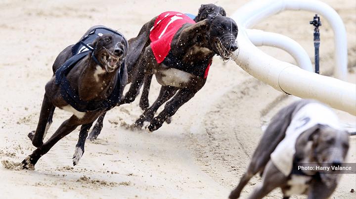 Henlow greyhound betting golf 2 ball betting tips