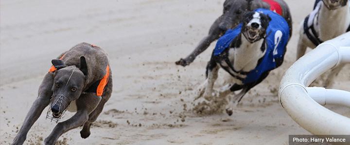 Greyhound Syndicate