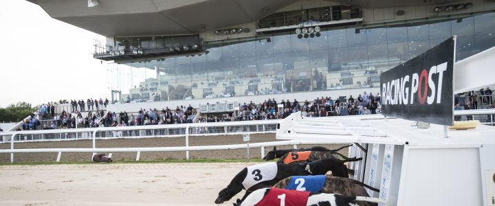2019 Greyhound Derby Betting Preview + a 500/1 Tip!